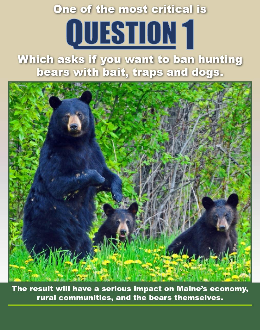 One of the most critical is Question 1 which asks if you want to ban hunting bears with bait, traps, and dogs.  The result will have a serious impact on Maines economy, rural communities, and the bears themselves.